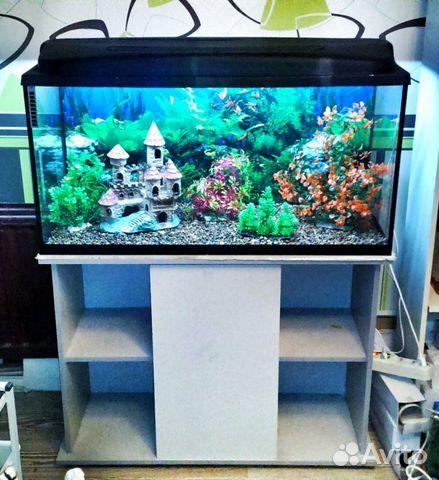 Как красиво оформить аквариум на 100 литров своими руками 1