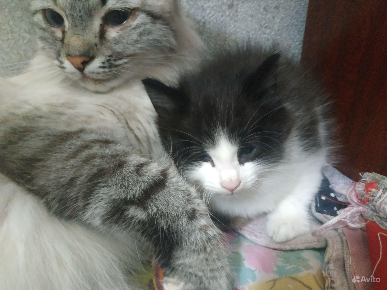 Отдам кота, 2 месяца