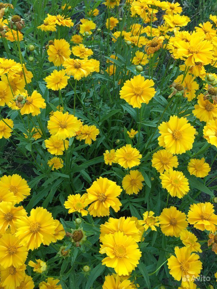 Цветы купить на Зозу.ру - фотография № 7
