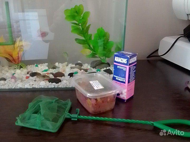 Аквариум с рыбками купить на Зозу.ру - фотография № 2
