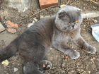 Котик молоденький