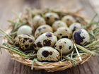 Перепелиное домашнее яйцо