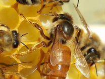 картинки пчелы на липецк бу, неоргинальные неоригинал