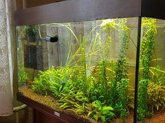 Аквариум juwel rio 125 с тумбой