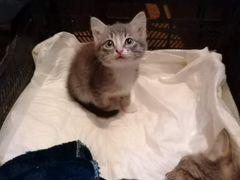 Котенок в дом