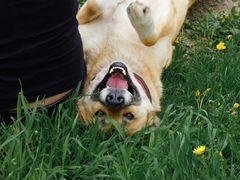 Зинка Собака в добрые руки