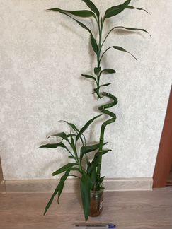 Домашние растения объявление продам