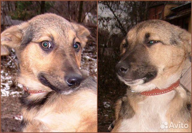 уже купить собаку на авито в москве породы обзоры