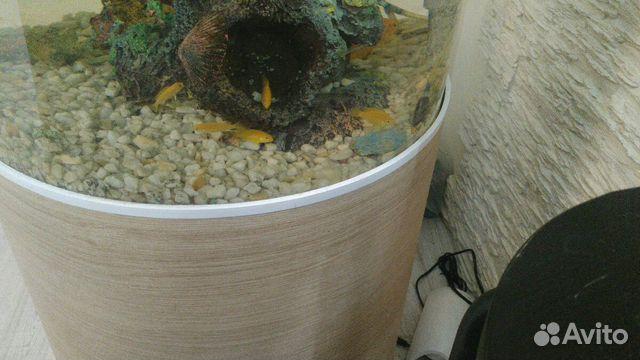 Цихлиды еллоу (мальки 3-5 см)