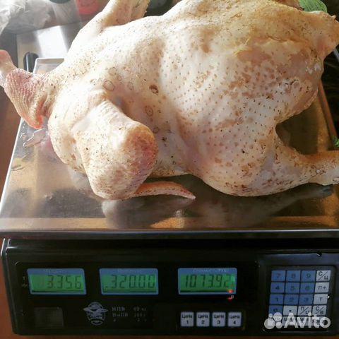 Цыплята кобб-500 купить 3