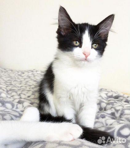 Ищу дом для котенка  89219446280 купить 4