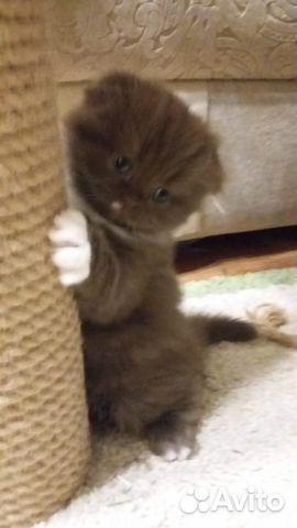 Очаровательные котята  89132492220 купить 1
