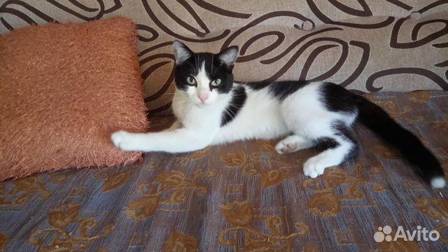 Кошечка с котиком мышеловы  89501307486 купить 3