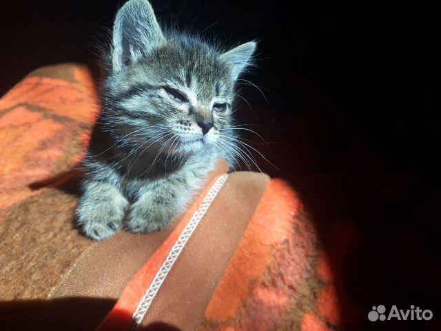 Милые котята ищут родителей  89992093964 купить 4