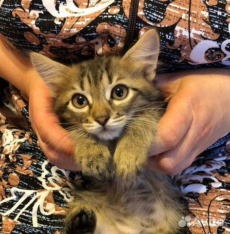 Котенок Шпротик ищет дом