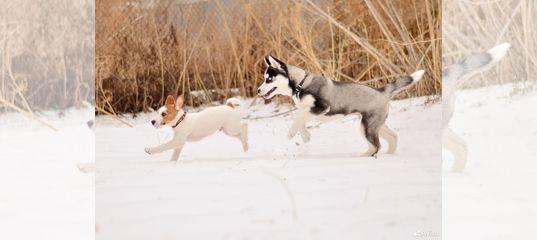 Вопросы по дрессировке собак