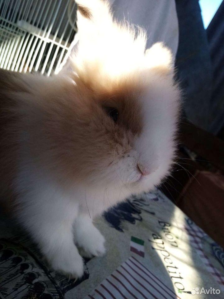 Декоротивный кролик  89289663314 купить 1