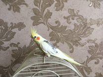 Попугай Карелла с клеткой