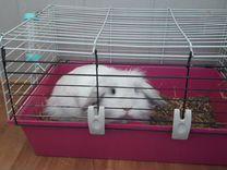 Декоративный вислоухий кролик