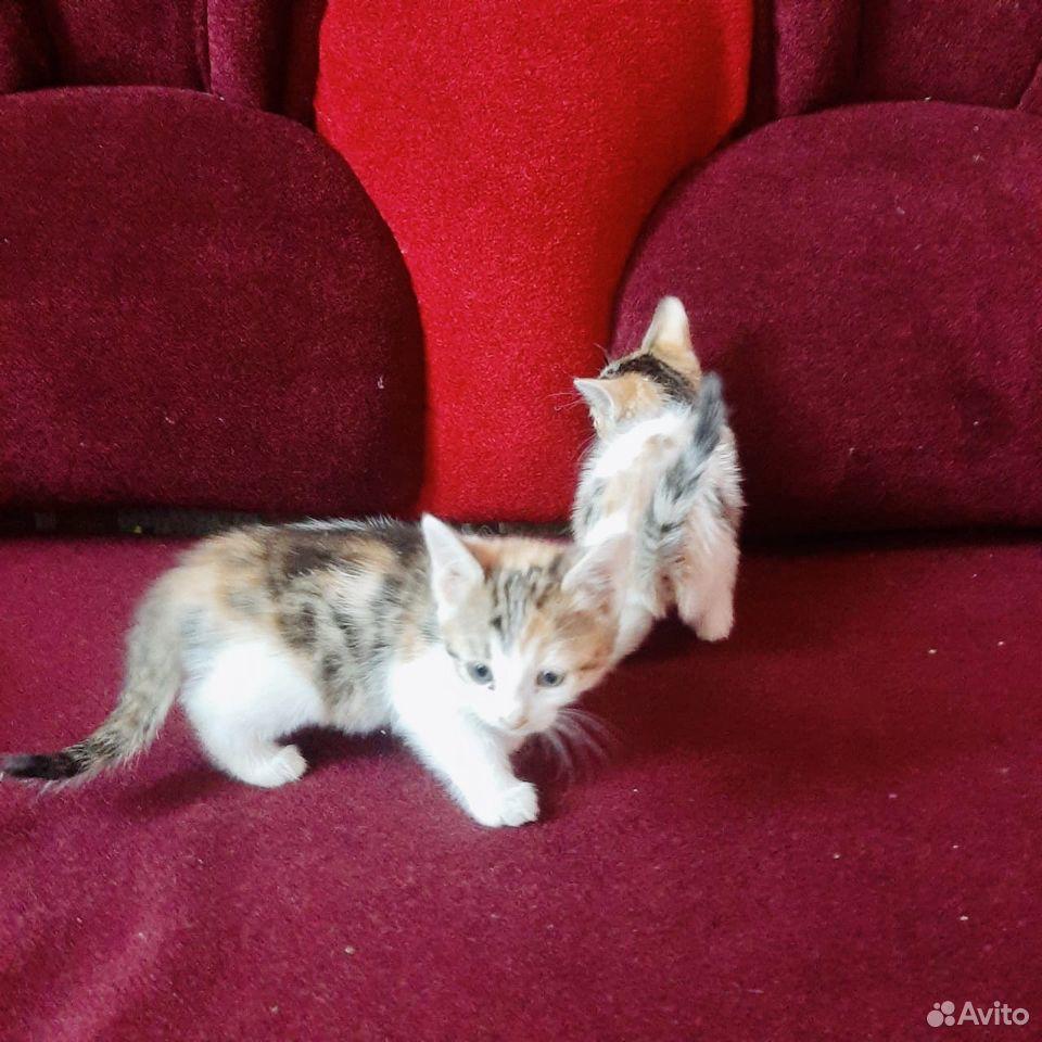 Give kitten in good hands  89379140006 buy 1