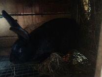 Кролики крупные годовалые