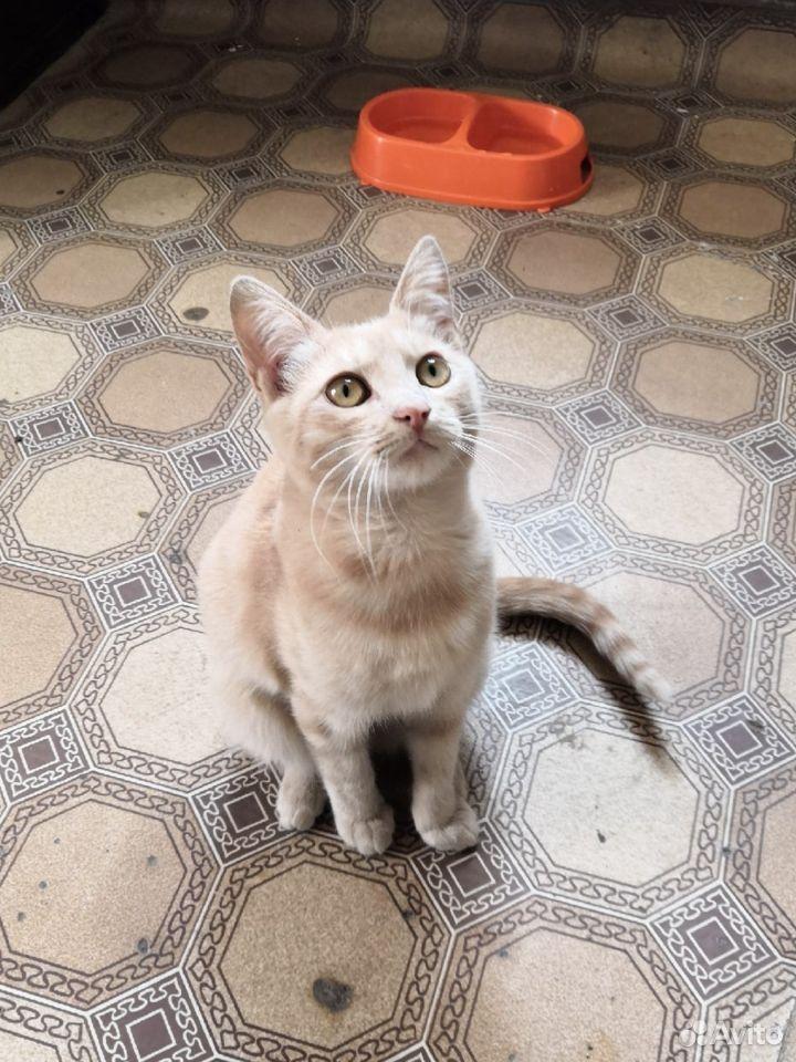 Котики ищут добрые руки  89102186335 купить 9