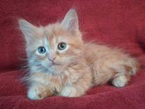 Рыжие котята 2 месяца