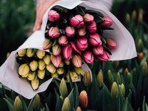 Тюльпаны Оптом Свежая Срезка — Растения в Москве