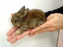 Милые, пушистые малыши декоративных кроликов