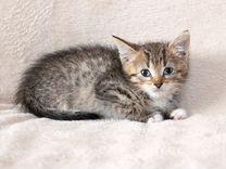 Котенок Пеструшка - трогательный ребенок в дар