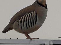 Попугай — Птицы в Москве